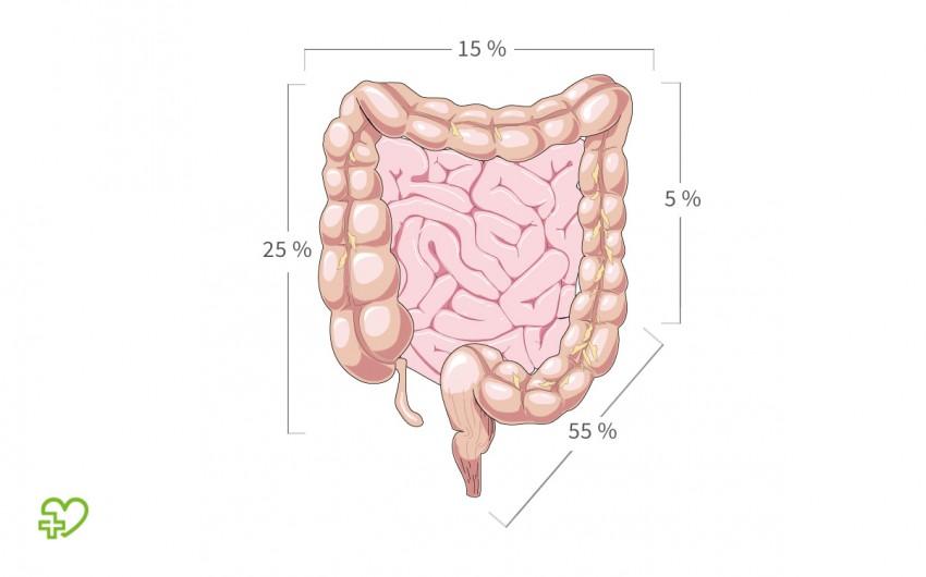 Eine grafische Darstellung des Darms.