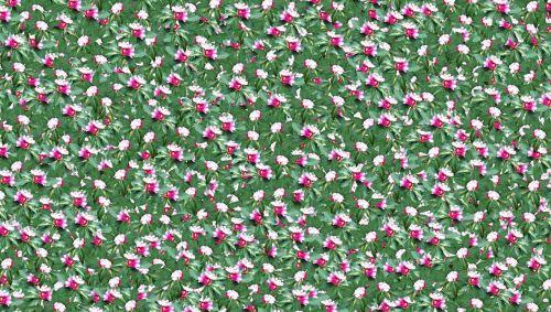 Ein Bild mit weißen und roten Punkten auf grüner Fläche
