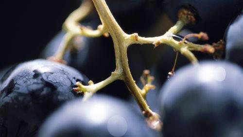 Nahaufnahme von roten Weintrauben