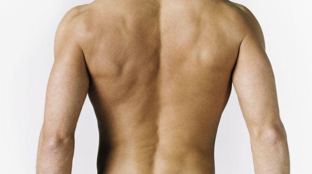 Die Schulter Schultermuskeln: Einige Schultermuskeln und ihre ...