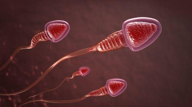 Illustration: Spermien.