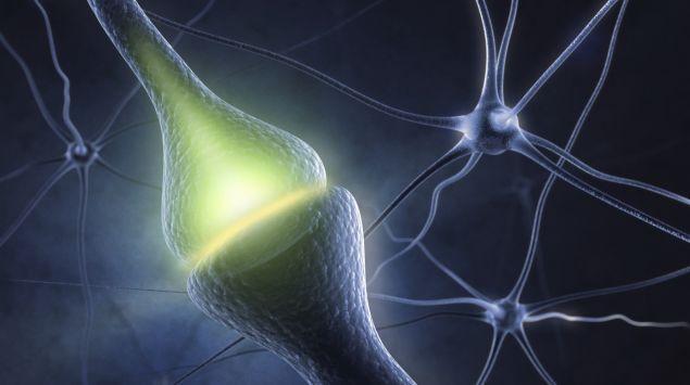 Man sieht Nervenzellen und eine Synapse.