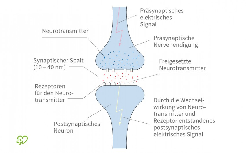 Darstellung einer Synapse.