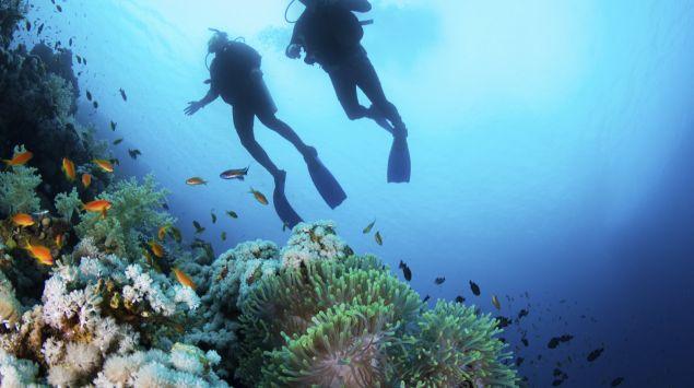 Das Bild zeigt zwei Taucher unter Wasser.