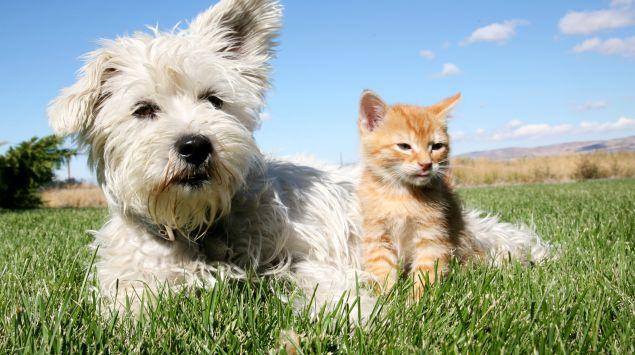 Das Bild zeigt einen Hund und eine Katze.
