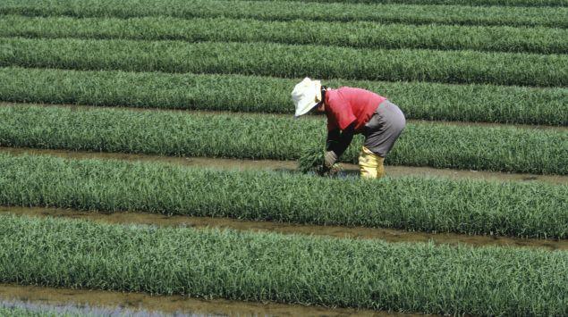Das Bild zeigt eine Person, die auf einem Feld arbeitet.