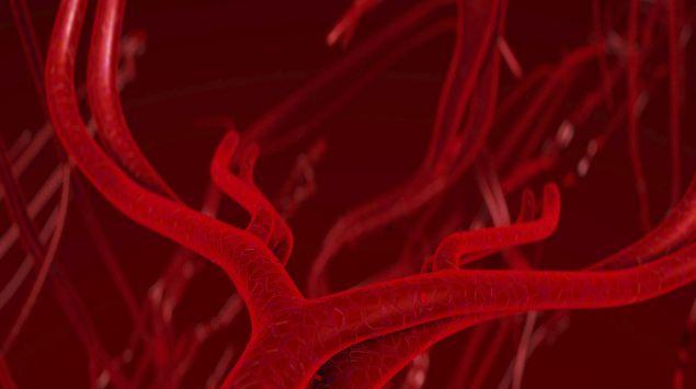 Illustration: Blutgefäße