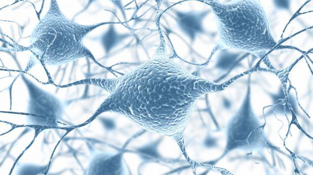 Das Bild zeigt Nervenfasern.