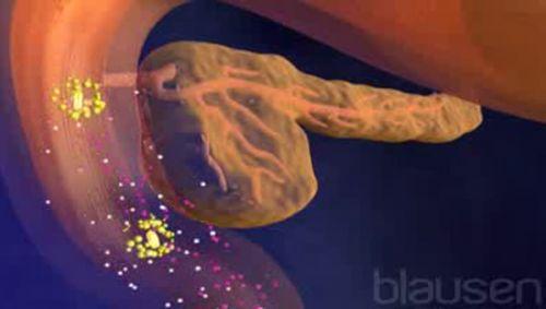 Verdauungsenzyme Video