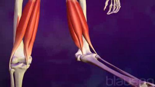 Verletzung hinterer Oberschenkelmuskel Video