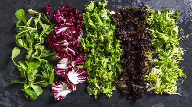 Verschiedene Salatsorten nebeneinander aufgereiht