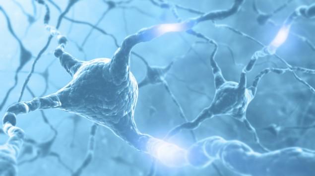 Man sieht mehrere miteinander verknüpfte Nervenzellen.