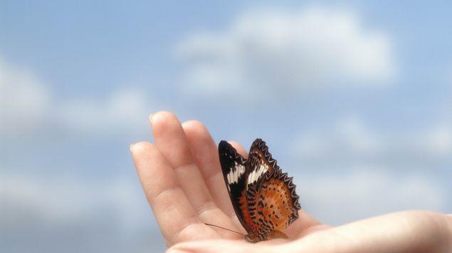 Das Bild zeigt eine Hand mit einem Schmetterling.