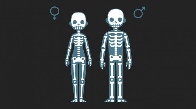 Man sieht eine grafische Darstellung einer Frau und eines Manns als Röntgenbild.
