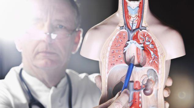 Ein Arzt zeigt an einem Körpermodell auf die Speiseröhre.