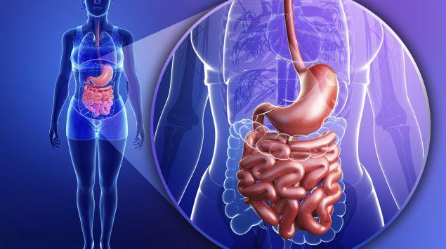 Eine Illustration zum Verdauungstrakt einer Frau: Farblich hervorgehoben sind Speiseröhre, Magen und Dünndarm