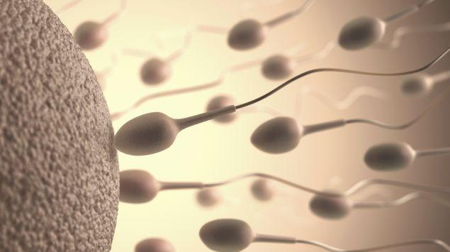 Das Bild zeigt eine Illustration von Sperma und einer Eizelle.