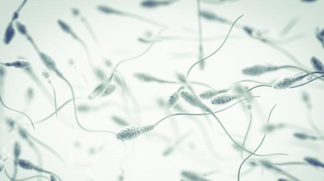 Spermien unter dem Mikroskop.