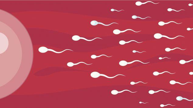 Man eine Illustration von Spermien auf dem Weg zur Eizelle.