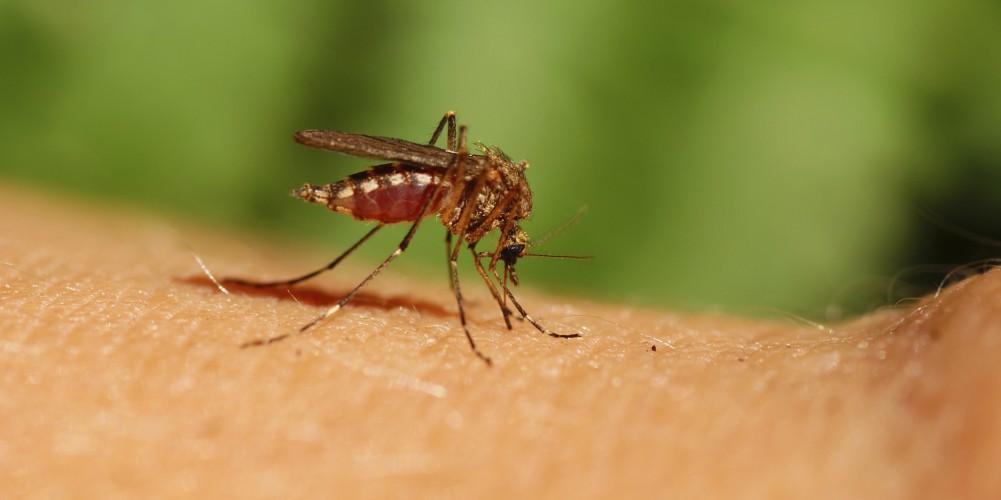 Fiebre del chikungunya