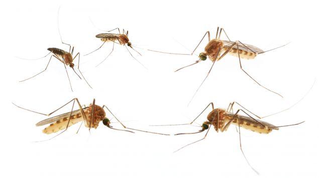 Mückenatlas zur Stechmückenkartierung - Onmeda.de
