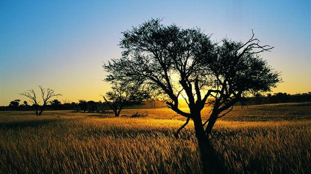 Das Bild zeigt einen Baum in Südafrika.