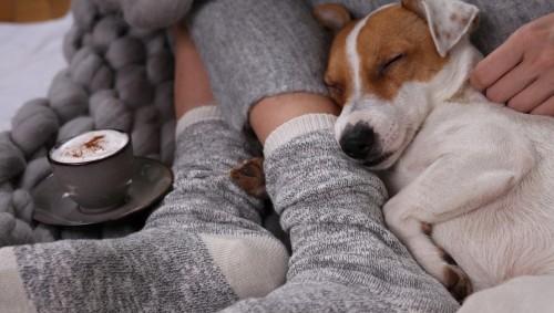 Ein Jack-Russell-Terrier kuschelt sich schlafend an die Füße einer Person, die in grauen Socken stecken.