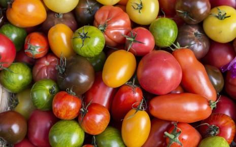 Es gibt viele Sorten Tomaten mit unterschiedlichen Farben und Formen.