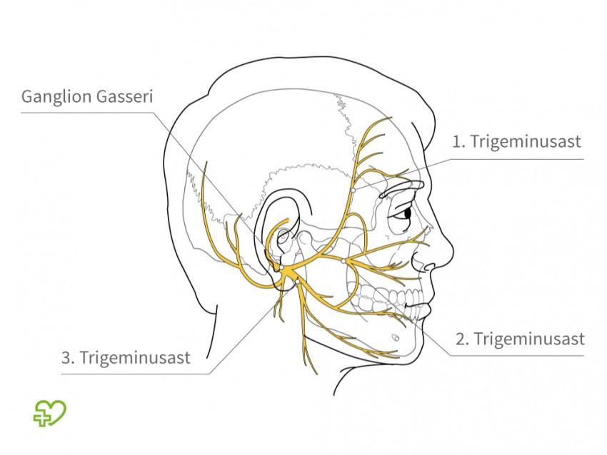 Großzügig Nerven Im Gesicht Bilder - Anatomie Ideen - finotti.info