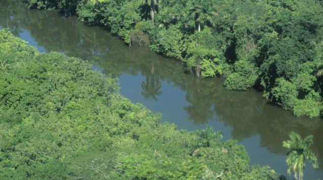 Das Bild zeigt einen Fluss im Amazonasgebiet.