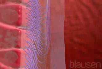 Der Komplex der Vitamine vom Haarausfall