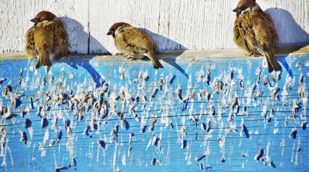 Das Bild zeigt drei Vögel, die auf einem Holz-Vorsprung sitzen.