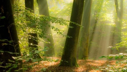 Man sieht einen Wald und Licht, das auf den Boden fällt.