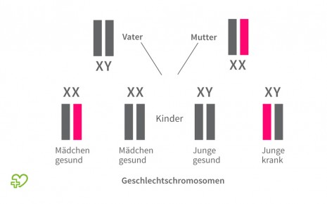 X-chromosomal-rezessive Vererbung