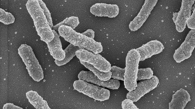 Der Pesterreger: Yersinia pestis