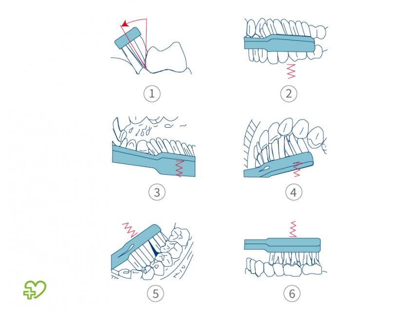 Zahnpflege und Mundhygiene Zahnputztechnik: Bass-Technik ...